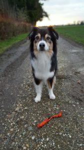 Hundeschule, Hundetraining