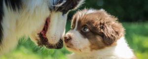 Basiskurs, Hundeschule Pfoten Academy