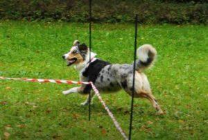 Longieren - Hundeschule Pfoten Academy