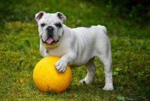 Specials - Hundeschule Pfoten Academy
