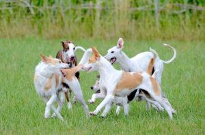 Spielstunde - Hundeschule Pfoten Academy