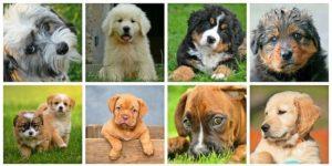 Beratung vor dem Hundekauf - Hundeschule Pfoten Academy