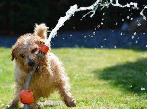 Hundetraining Kirchham