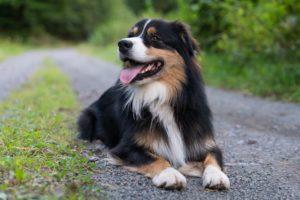 Basiskurs, Hundeschule, Hundetraining