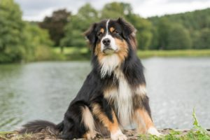 Hundeschule Pfoten Academy, Bad Füssing, Niederbayern, Passau