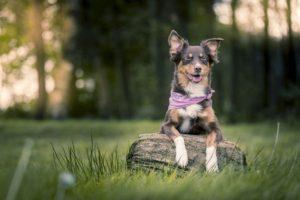 Hundeschule Pfoten Academy