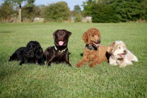 Gruppentraining - Hundeschule Pfoten Academy