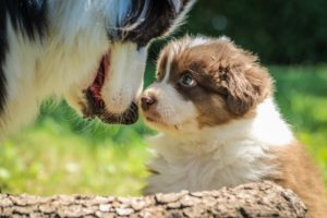 Hundetraining, Hundeschule, Kurse