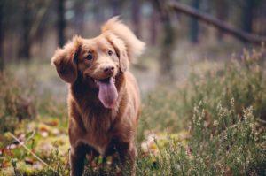 Hundeschule Pfoten Academy, Bad Füssing, Hundetraining