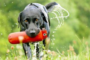 Hundeschule Pfoten Academy, artgerechte Beschäftigung, Dummytraining