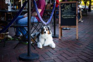 On Tour - Hundeschule Pfoten Academy