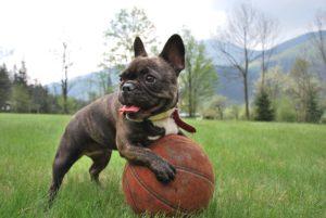 Hundetraining, Hundeschule, Specials