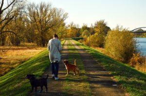 Social Walks - Hundeschule Pfoten Academy