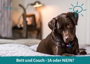 Bett und Couch - Ja oder Nein