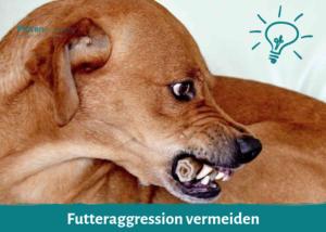 Futteraggression vermeiden
