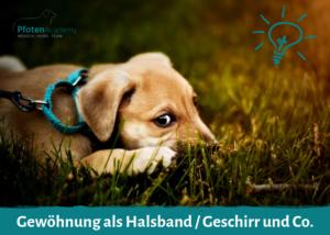 Gewöhnung an Halsband, Geschirr & Co.