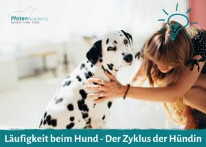 Läufigkeit beim Hund - Der Zyklus der Hündin