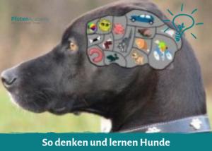 So denken und lernen Hunde