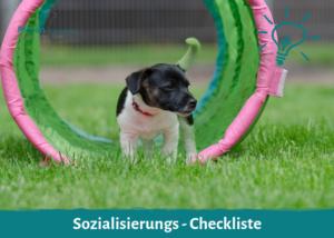 Sozialisierungs-Checkliste