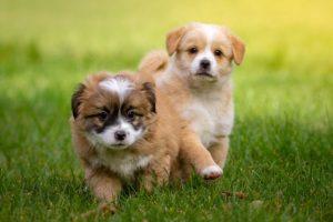 Hundeschule Pocking, Welpen