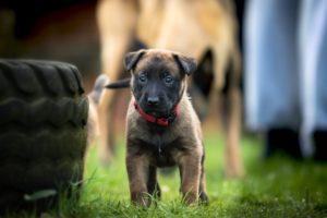 Welpenkurs, Hundeschule Pfoten Academy Passau