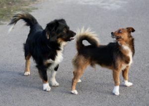 Hundeschule Vilsofen
