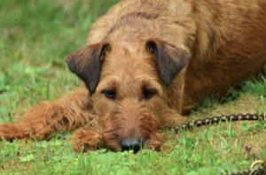 Junghunde Hundeschule Pfoten Academy