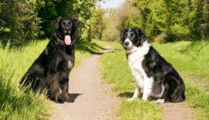 Hundeschule Rotthalmünster