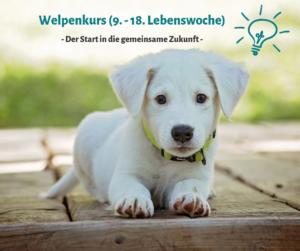 Welpen Hundeschule Passau